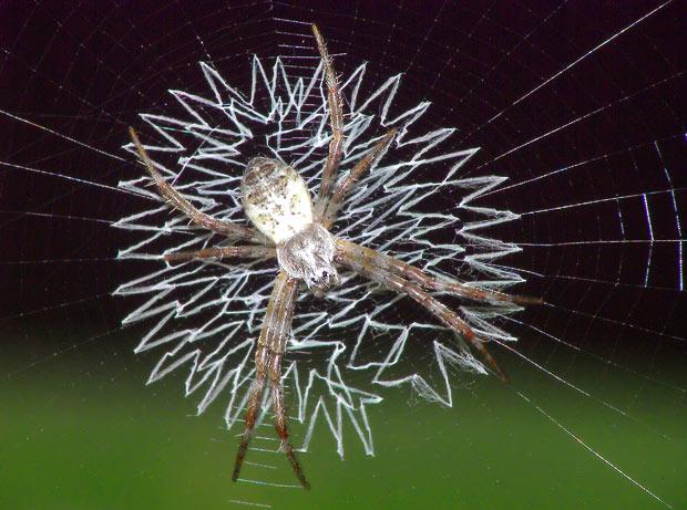 spider-web_1502452i